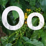 O for origin (fruit)